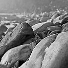 Rocky Shoreline - Seal Rocks NSW by Robyn Selem