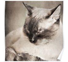 Feline Recline Poster