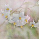 Potato Flowers in the Sunlight by Rozalia Toth