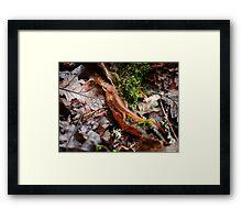 Newt Framed Print