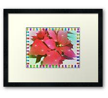 Poinsettia for Christmas Framed Print
