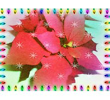 Poinsettia for Christmas Photographic Print