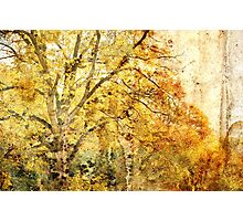 the old master - autumn... Photographic Print