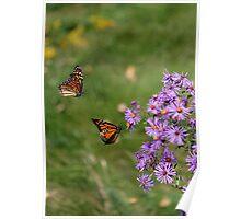 Monarchs In Flight Poster