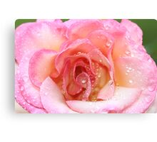 """""""Rose After The Rain"""" Canvas Print"""