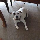 Meet Miss Maisie by joycee