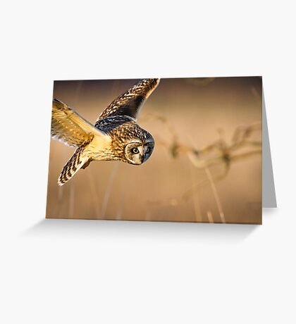 Motion Detected -- Short-eared Owl Greeting Card