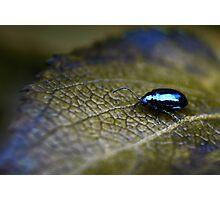 Freezing Bug Photographic Print