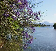 jacaranda river ... by gail woodbury