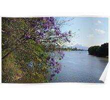 jacaranda river ... Poster