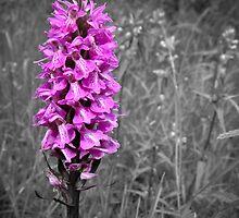 Purple by Stuart  Noall