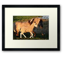 Father & Son Konik Framed Print
