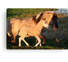 Father & Son Konik Canvas Print