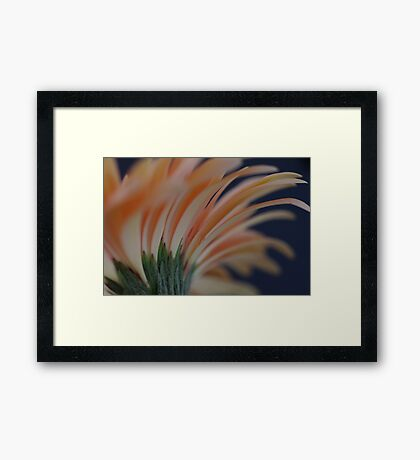 Peachy Cream  Framed Print