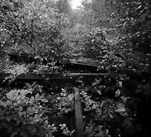 Nature Track by Stuart  Noall