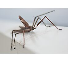 Sticky Insect Photographic Print