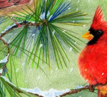 Cardinals in the Snowy Pines Sticker