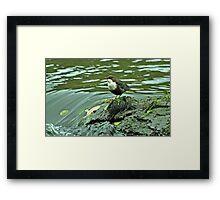 Adult Dipper Framed Print