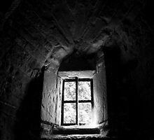 See The Light by Stuart  Noall
