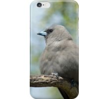 Juvenile Black-faced Woodswallow iPhone Case/Skin