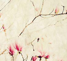 Spring Botanical - Tulip Tree, Magnolia × soulangeana by Virginia Sanderson