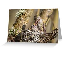 Sword Swallowing -- Anna's Hummingbird Nestling Greeting Card
