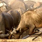 The Quest for Water - Kruger National Park by eyedocbrian
