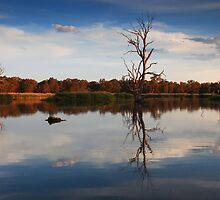 Golden Light- Wonga Wetlands, NSW by Cameron B