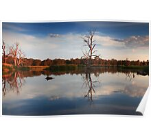Golden Light- Wonga Wetlands, NSW Poster