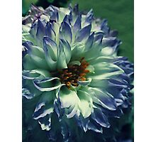received flowers Photographic Print