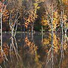 Season of Color by mikepaulhamus