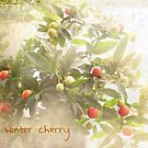 Winter cherry by Rosie Rowe