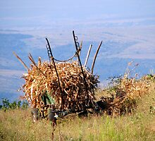 Loading the Harvest in Barda, Romania by Dennis Melling