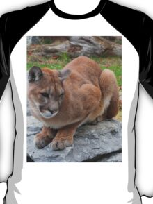 Cool Cougar