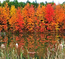 Fall Colors by Greg Meland