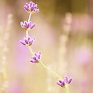 Lavender Bliss by Tracy Friesen
