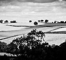 Landscape by Stuart  Noall