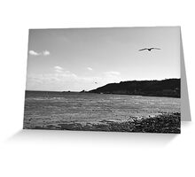 black and white landscape with sea gull Greeting Card