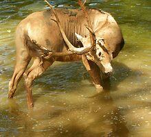 Mud on my Back, Red Deer by David  Hughes