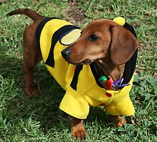 Bumble Bee dachshund by RainbowsEnd