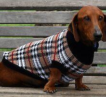 Frankie the dachshund by RainbowsEnd