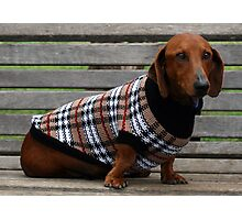 Frankie the dachshund Photographic Print