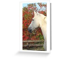Manolo in Fall Foliage Greeting Card