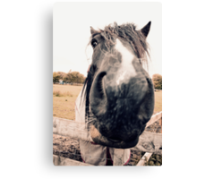 Horse Extreme Close-Up Canvas Print