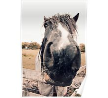 Horse Extreme Close-Up Poster