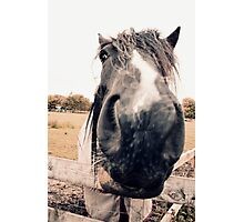 Horse Extreme Close-Up Photographic Print