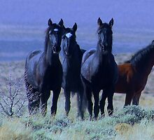 Black Beauties by Jeanne  Nations