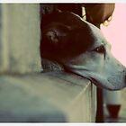 chienne de vie by telecaster64