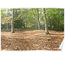 Fallen leaves in keston ponds Poster