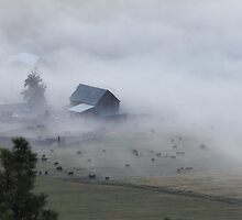 The barn, the cows, and the fog by KansasA
